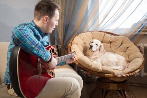 Spil musik for dit kæledyr