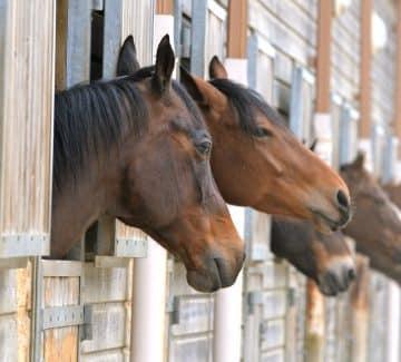 Heste på stald