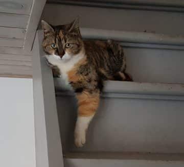 Kat på trappe