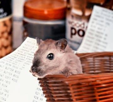 Løs hamster