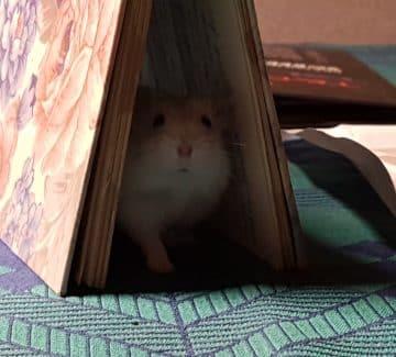 Hamsterbingo