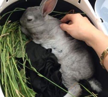 Kanin i transportkases